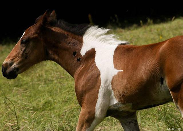 cheval-sur-cheval