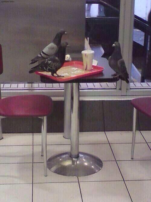 jespere-que-pigeon-sera-embauche