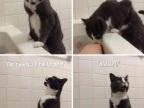 chat-fille-baignoire