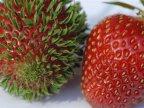 mutation-fraise