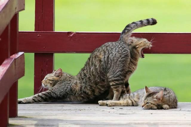 chat-dans-cul