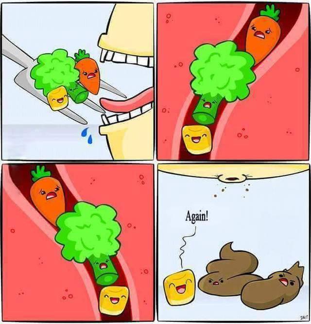 mais-toboggan-intestin