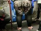 jespere-tigre-rugit-pas