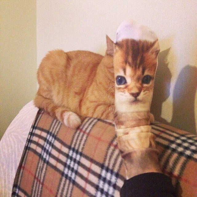 chat-chaussette-pied