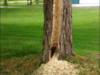 pic-vert-enerve-contre-arbre