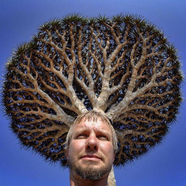 cheveux-arbre