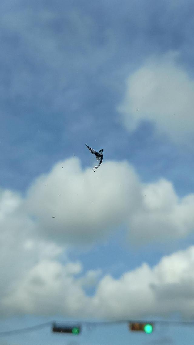 impact-pare-brise-forme-oiseau