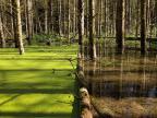 arbre-tombe-bloque-lentilles-eau