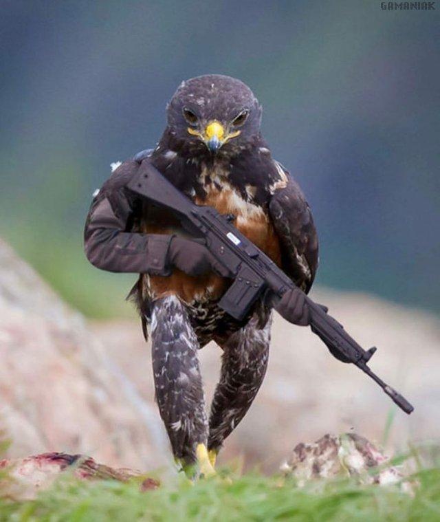 faucon-arme