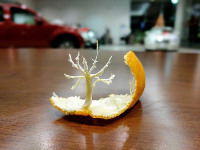 arbre-pelure-orange