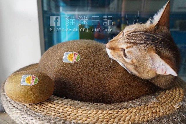 chat-kiwi