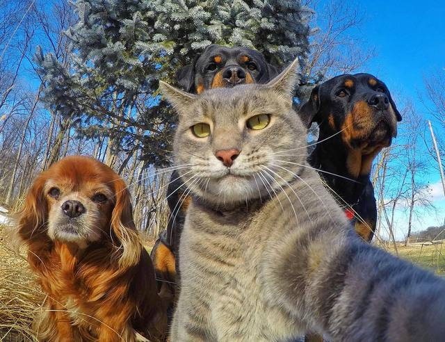 chat-selfie-chiens