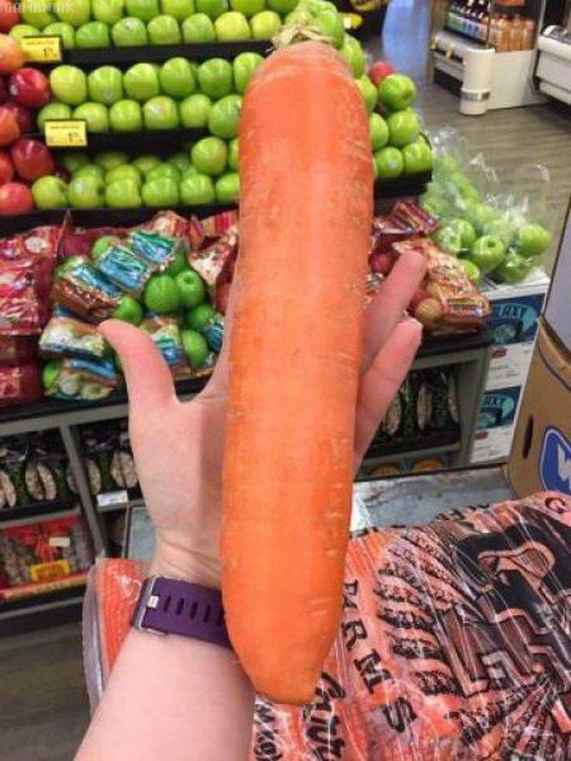 carotte-geante