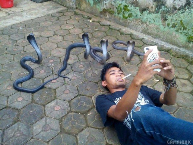 selfie-serpents