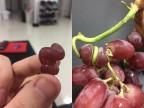raisin-tordu