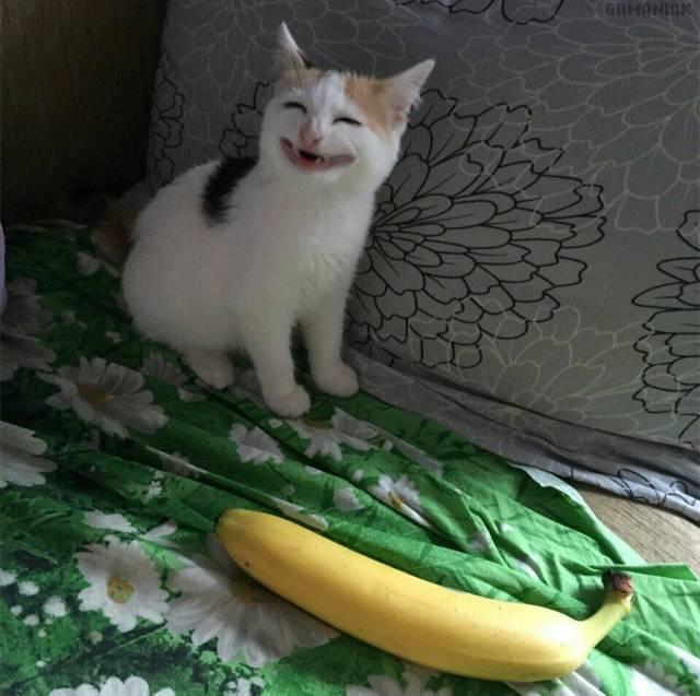 chat-tete-bizarre-banane