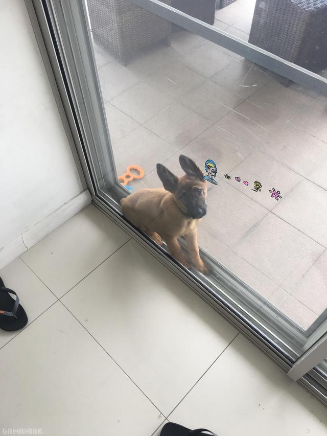 chien-bloque-fenetre-coulissante