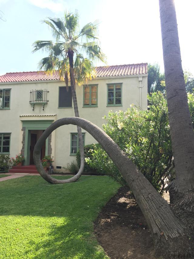 palmier-looping
