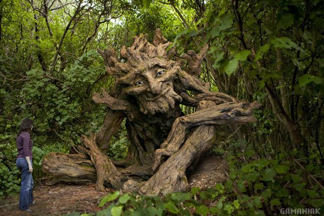 arbre-vieil-homme