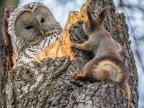 ecureuil-surpris-chouette