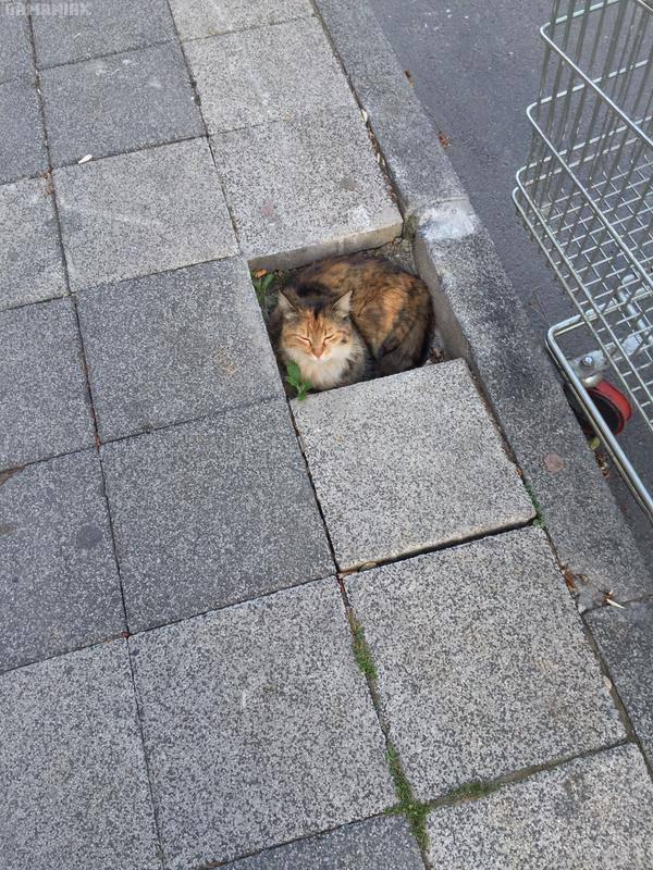 emplacement-reve-pour-chat