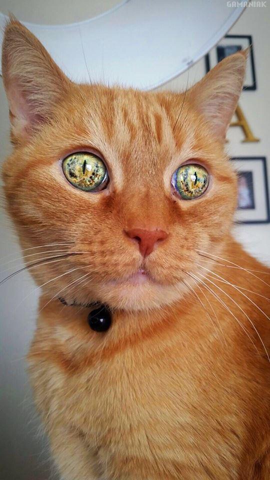 chat-univers-dans-les-yeux