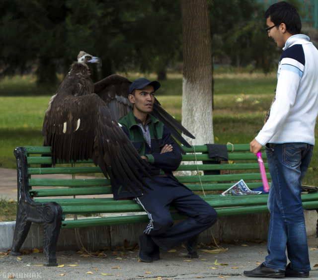 oiseau-garde-corps
