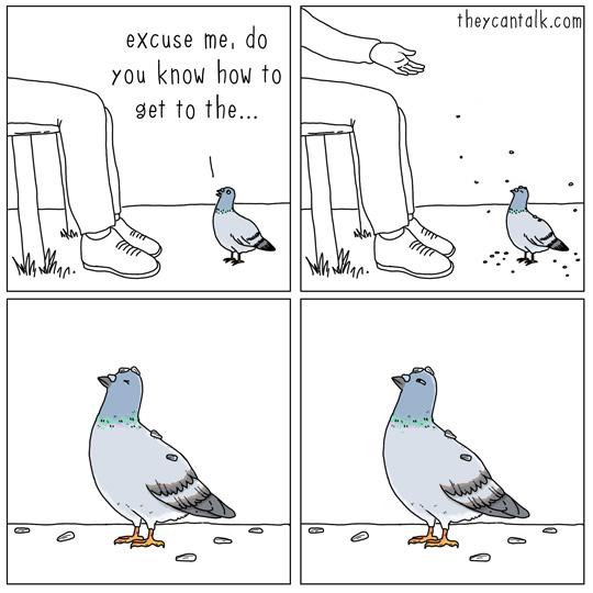 pigeon-demande-chemin-dessin