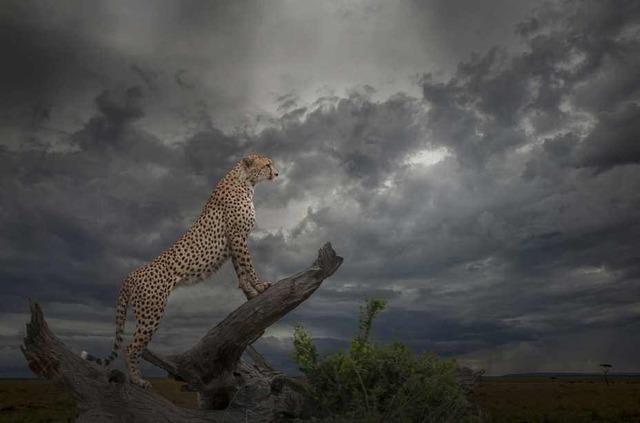guepard-ciel-nuageux