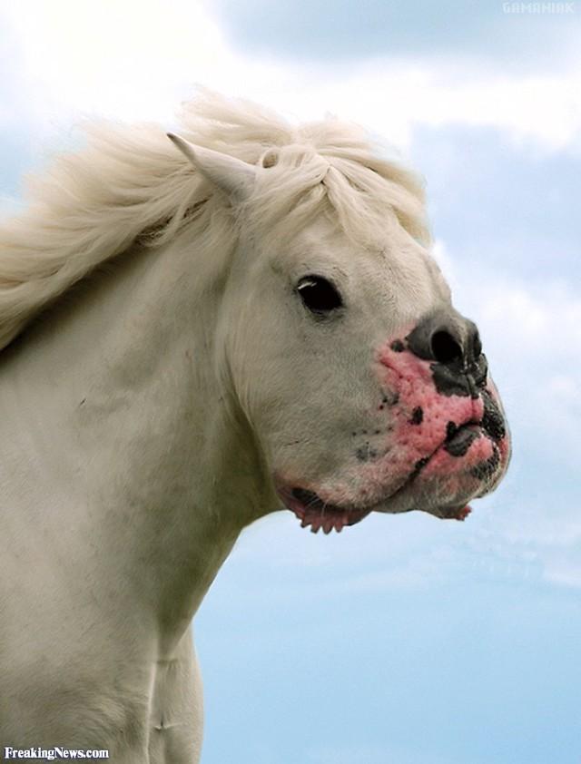 hybride-cheval-chien