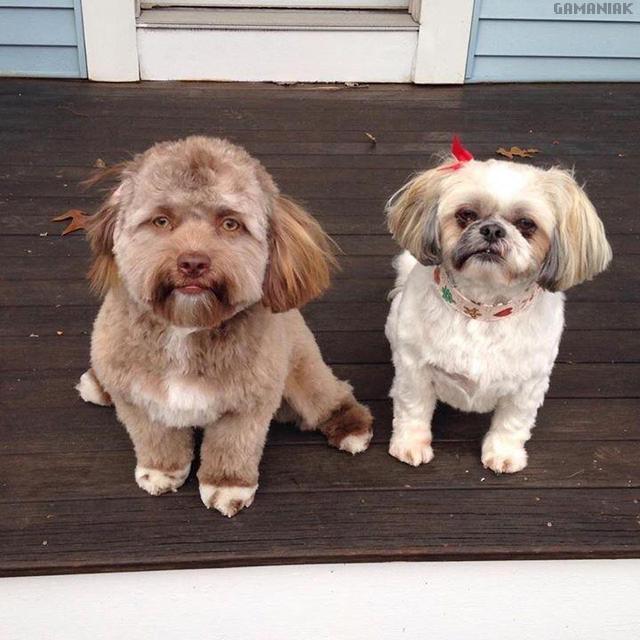 chien-visage-homme