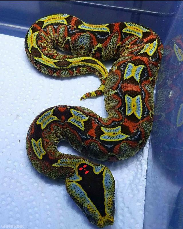 serpent-fantome-tete