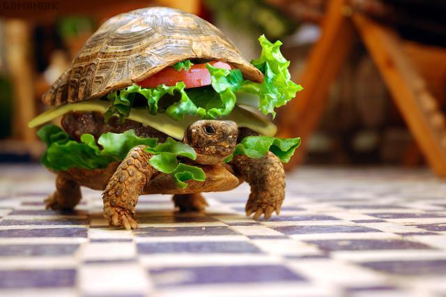 slow-food