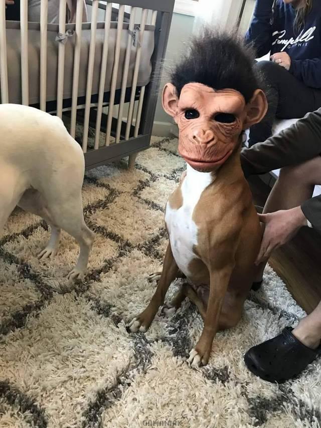 chien-masque-singe