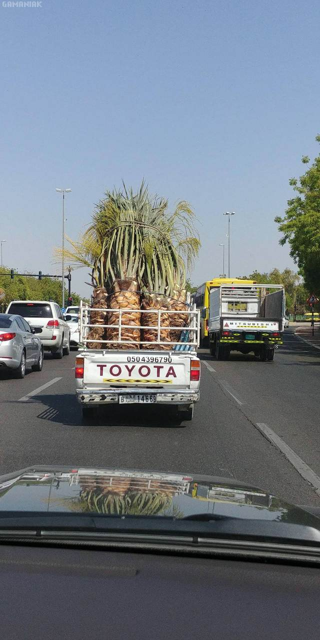 ananas-geants