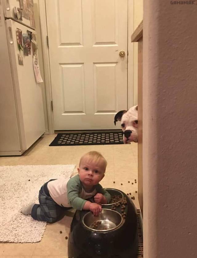 bebe-sert-gamelle-chien