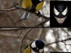oiseau-venom