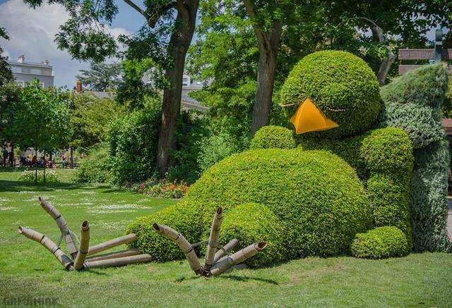 buisson-forme-oiseau-allonge-nantes-france