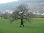 arbre-avec-pieds