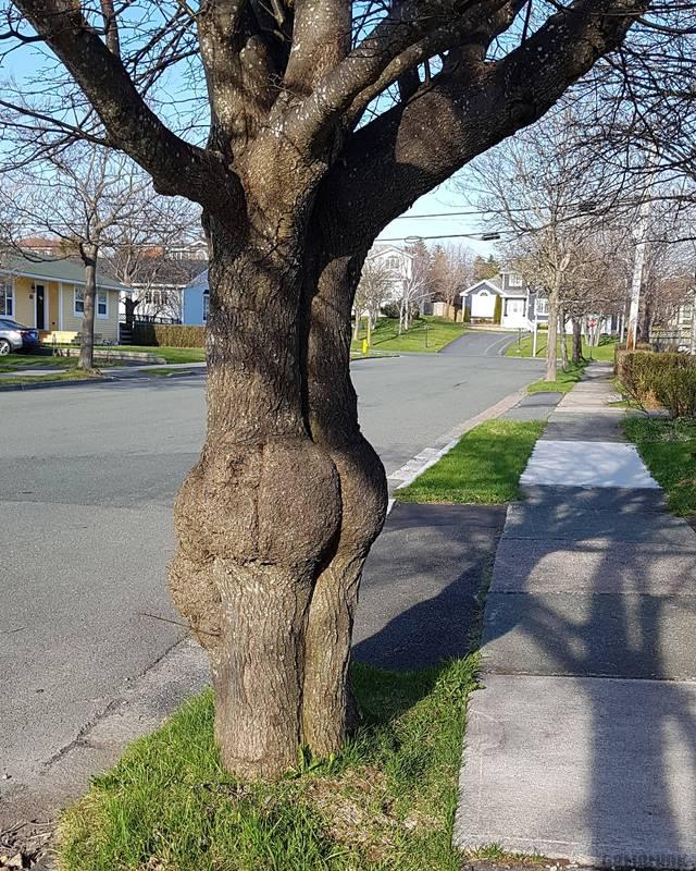 arbre-joli-fessier