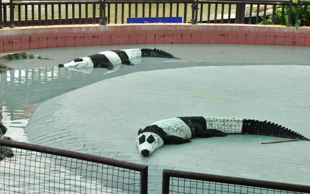 mignons-ces-pandas