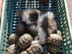 chaton-tortues-dormir-ensemble