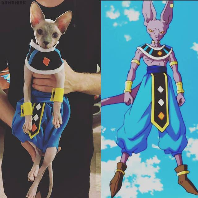 chat-cosplay-beerus