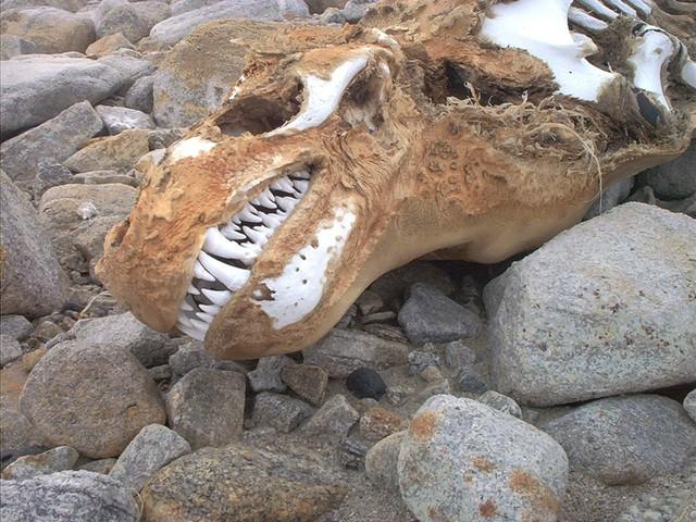 crane-leopard-mort