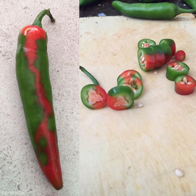 piment-bicouleur-rouge-vert