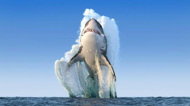 requin-saute-hors-eau