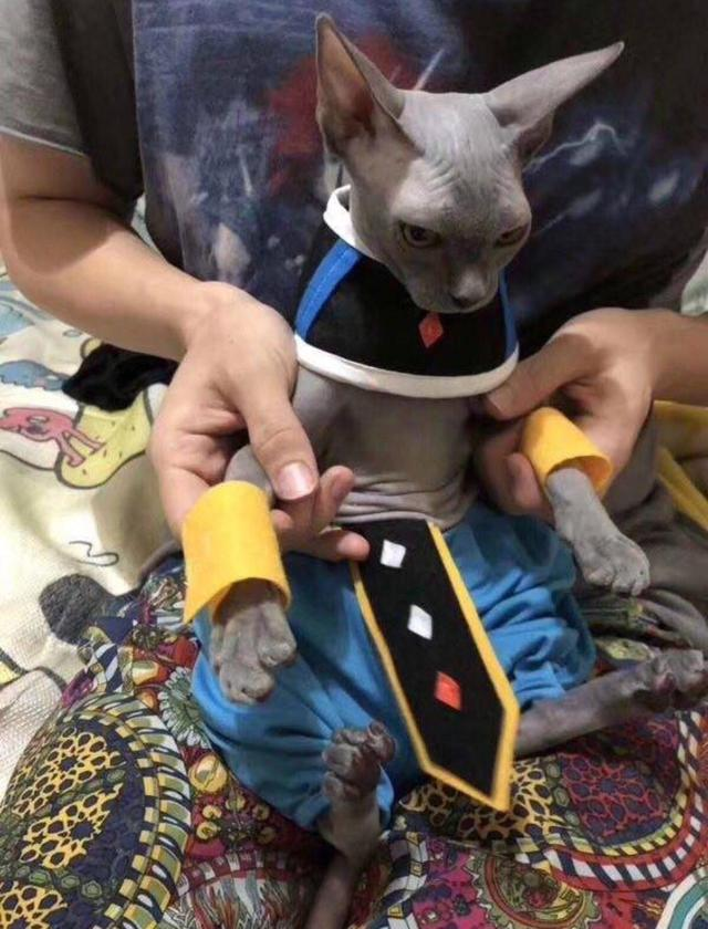 chat-beerus