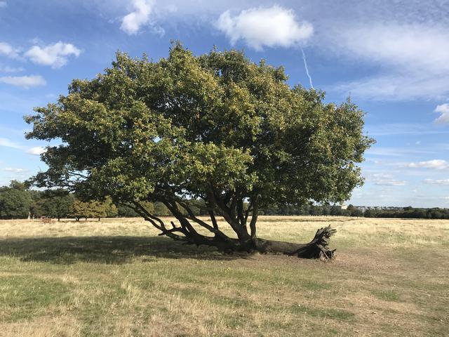 arbre-tombe-refuse-mourir