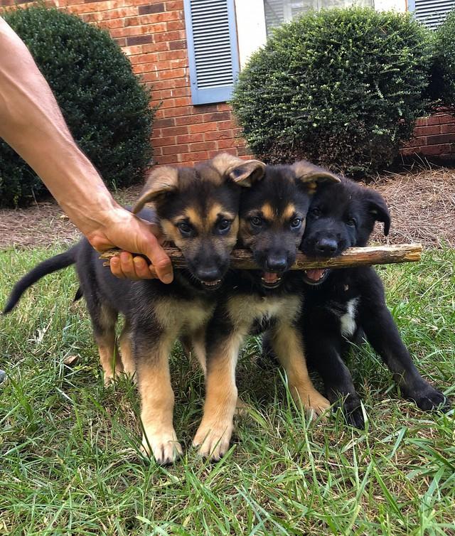 3-chiens-1-baton