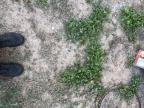 plantes-pousse-enterre-chat